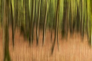 Foret8 by hubert61
