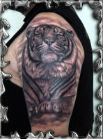 Tiger Arrogance - tattoo by mojotatboy