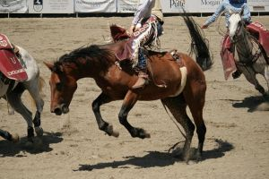 rodeo 12 by xbr0kendevotion