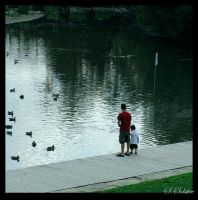 Duck Pond by Summers-Solstice