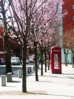Spring in London by Luana1985