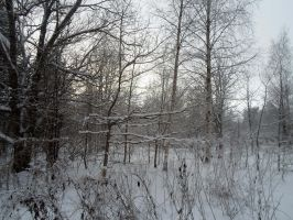 Winter forest 569 by MASYON