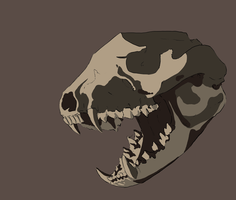 Tasmanian Devil Skull by Alithographica
