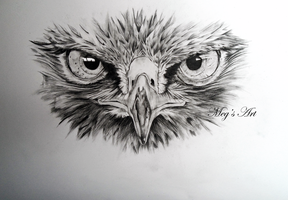 Buzzard Face Drawing by stardust12345