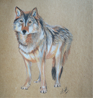 Timber Wolf by Lucky101212