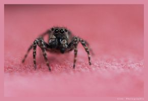 Spider On Bedsheet by Undercover-Superhero