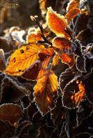 Shining autumn leaves by AStoKo