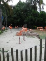 Flamingo Flock by CelticStrm-Stock (26) by CelticStrm-Stock