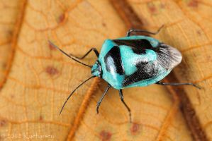 Blue shield bug by Dark-Raptor