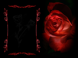 Red rosse by Trunida