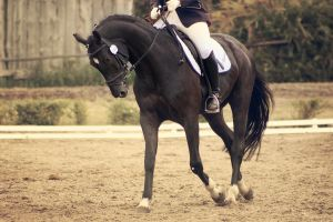 Black Dressage by Underthunderphotos