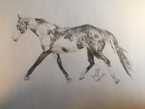 Paint horse graphite drawing by imaginepride