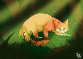 In the Wild by Effily