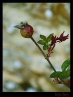 Lone Berry by dannishez