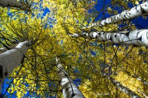 Looking Up at Fall by StephGabler