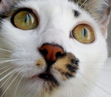 White Cat by FilippaID