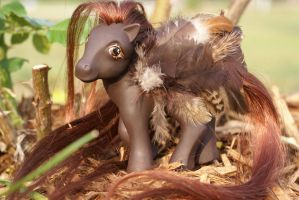 Chocolate Feather MLP Custom by wylf