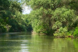 Forest seen from water by pvf