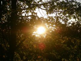 Sun Flare through the Leaves by melissaleahmp