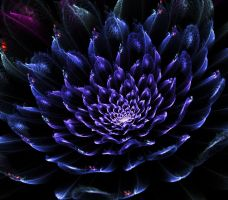 Dark blue flower. by Kondratij