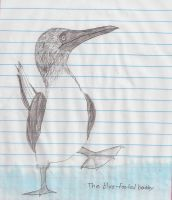 The Blue-Footed Booby by Kami-tan123