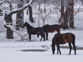 It's snowing at last by starykocur