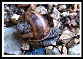 Snail by SoundOfSilence87