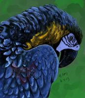 Blue and Yellow Macaw by NiGhT-sTaLkEr13