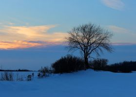 Winter Landscape by Michies-Photographyy
