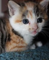 Kitten: Photo 3 by jmhamilton