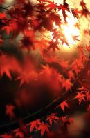Spiraaal Of enchanting silence by alexandre-deschaumes