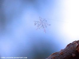 Snow flake by loozak84