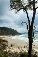 Noosa National Park 1 by wildplaces