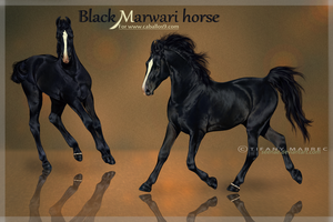 Caballos : Black Marwari Horse by Seenae
