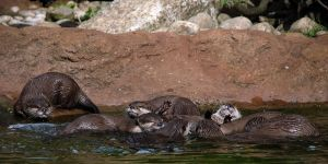 Otterpile by robbobert