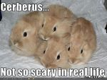 Cerberus Lolcat by SamwiseTheAwesome