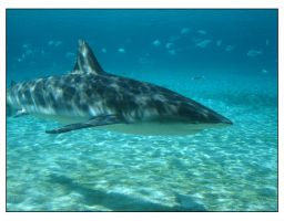 Shark Bay 04 by h-o-l-z