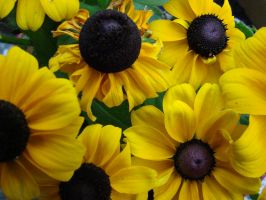 yellow. by Lythael