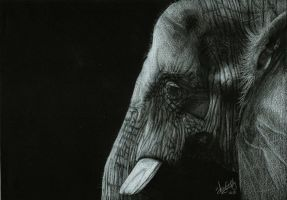 Elephant by Shinigami1289