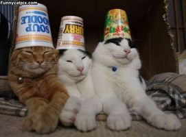 Cats with hats by DJ-Claire