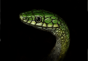 Green Snake by QuinnBarsballe