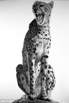 Acinonyx Jubatus by chandito
