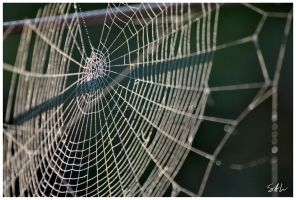 October Web by Momenti-Photo