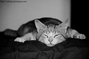 The peaceful cat. by XElimoX