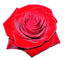red rose png by Melissa-tm