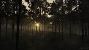 Pine Forest by HarelForge