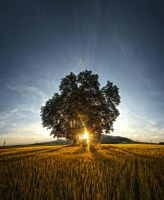 LonelyTree by FrantisekSpurny