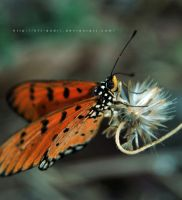 butterfly V by KFT-Andri