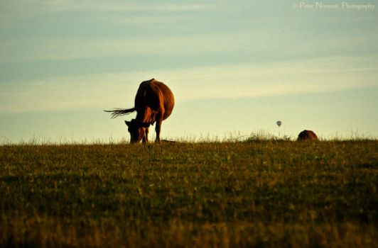 Cattle Sunset by DeepW1thin