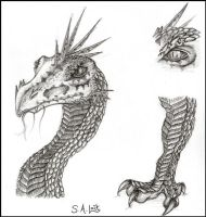 How i Think Saphira Should be by singham-wilk